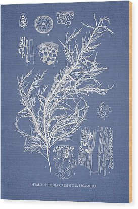 Hyalosiphonia Caespitosa Okamura Wood Print by Aged Pixel