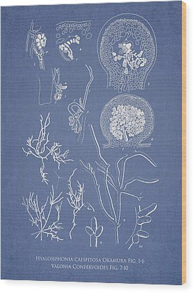 Hyalosiphonia Caespitosa Okamura Valonia Confervoides Wood Print by Aged Pixel
