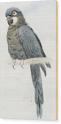 Hyancinth Macaw Wood Print by Henry Stacey Marks