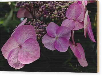 Wood Print featuring the photograph Hydrangea Flowers  by James C Thomas