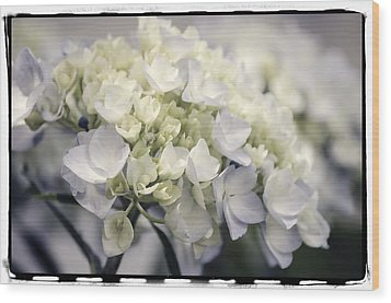 Wood Print featuring the photograph Hydrangea  by Craig Perry-Ollila