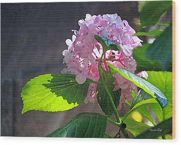 Hydrangea Heaven Wood Print by Suzanne Gaff