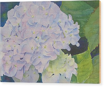 Hydrangea Wood Print by Judy Mercer