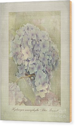 Hydrangea Macrophylla Blue Bonnet Wood Print by John Edwards