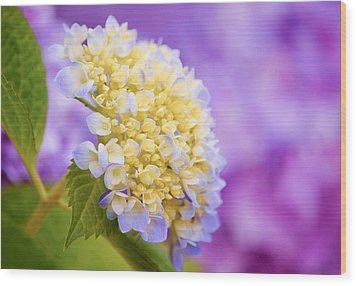 Hydrangea On Purple Wood Print by Parker Cunningham