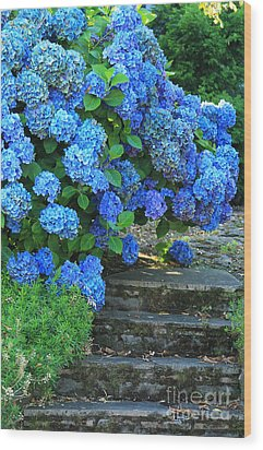 Hydrangea Steps 2 Wood Print by Jeanette French