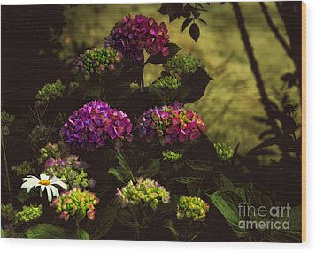 Hydrangeas In The Shade  Wood Print by Elaine Manley
