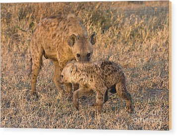 Hyena Mother And Cub Wood Print by Chris Scroggins