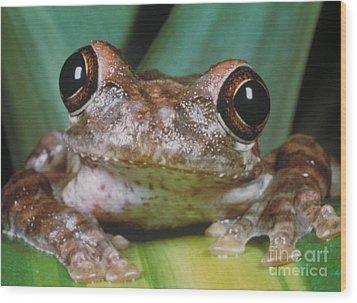 Hyla Vasta Tree Frog Wood Print by Jeff Lepore