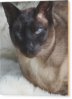 I Am A Tonkinese Wood Print by Margaret Saheed