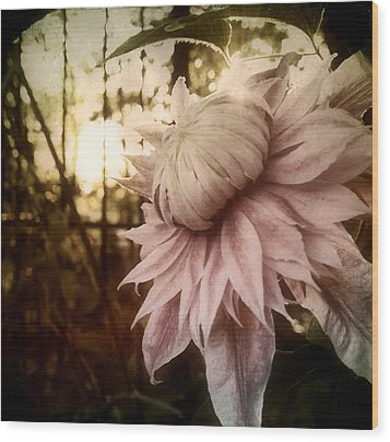 I Bloom Only For You She Whispered Wood Print by Susan Maxwell Schmidt