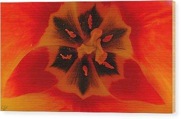 I Have A Dream... Into A Tulip. Wood Print by Sascha Kolek