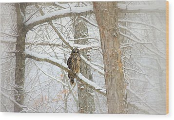I Have My Eyes On You Wood Print by Sharon Batdorf