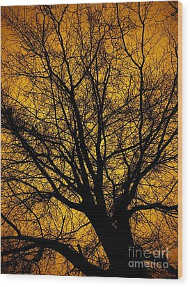 I Love Bare Trees Wood Print by Christy Ricafrente
