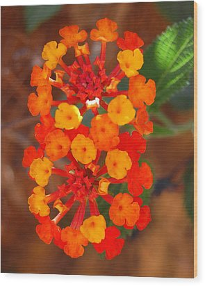 Wood Print featuring the photograph I Love Orange by Lew Davis