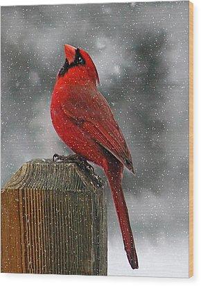 I Love Snow..... Wood Print by Judy  Johnson