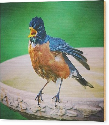 Bathing Robin Wood Print