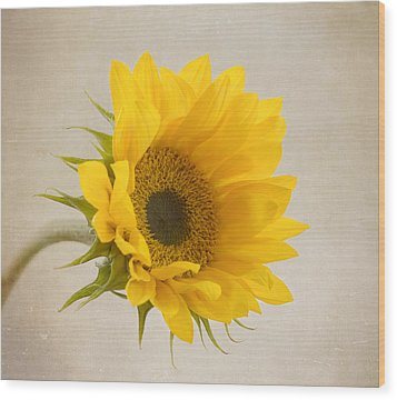 I See Sunshine Wood Print by Kim Hojnacki
