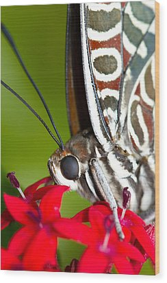 Wood Print featuring the photograph I See You Butterfly by John Hoey