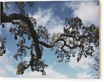I Touch The Sky Wood Print by Laurie Search