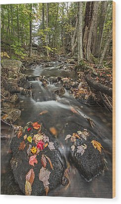 I Want More Wood Print by Jon Glaser