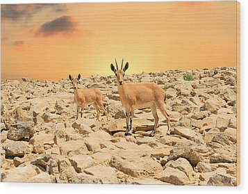 Ibexes And Sunset Wood Print