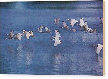 Ibis In Flight Wood Print by Pamela Blizzard