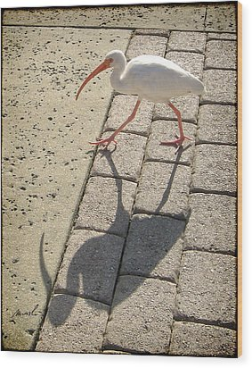 Ibis Wood Print by The Art of Marsha Charlebois