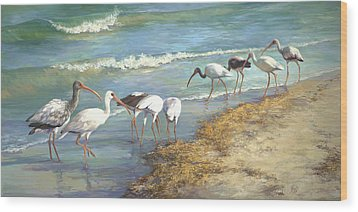 Ibis On Marco Island Wood Print by Laurie Hein