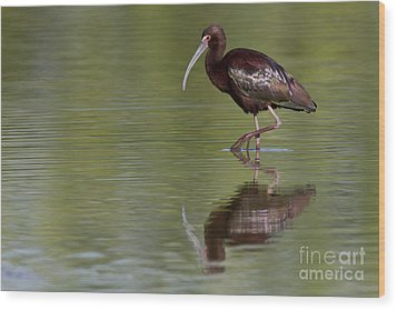Ibis Reflection Wood Print by Bryan Keil