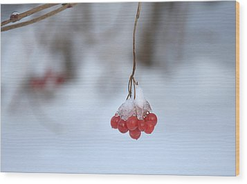 Wood Print featuring the photograph Ice Berries by Sabine Edrissi