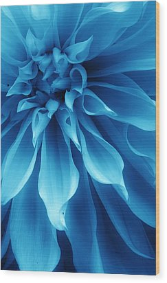 Ice Blue Dahlia Wood Print by Bruce Bley