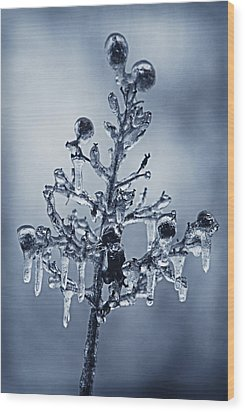 Ice Bouquet Wood Print