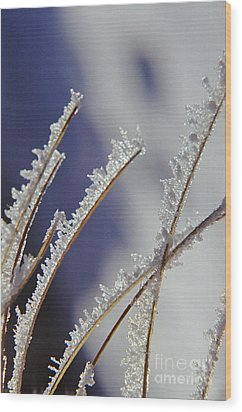Wood Print featuring the photograph Ice Crystals On Fireweed Fairbanks  Alaska By Pat Hathaway 1969 by California Views Mr Pat Hathaway Archives