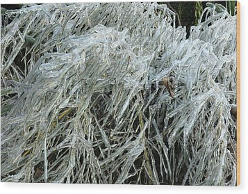 Ice On Bamboo Leaves Wood Print by Daniel Reed