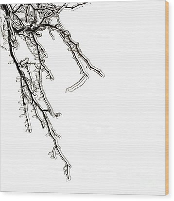 Ice On Branches Wood Print by Blink Images