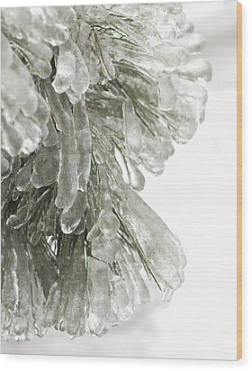 Ice On Pine Branches Wood Print by Blink Images
