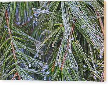Ice On Pine Needles  Wood Print