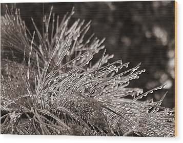 Ice On Pine Wood Print by Patricia Schaefer