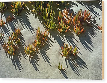 Ice Plant In Sand Wood Print