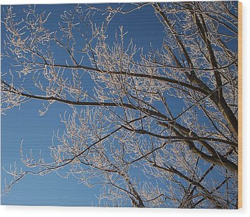 Ice Storm Branches Wood Print