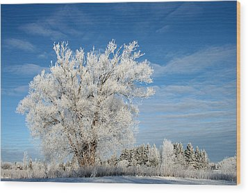 Ice Tree Wood Print by Brady D Hebert