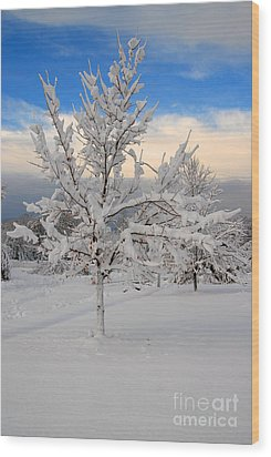 Ice Tree Wood Print by Fred Cerbini