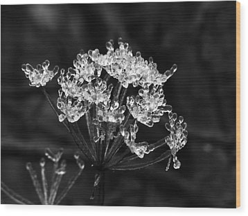 Ice Weed Wood Print
