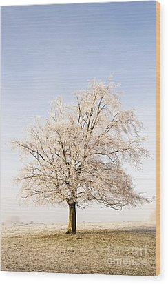 Iced Tree Wood Print by Anne Gilbert