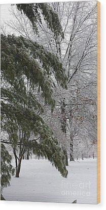 Iced Trees Wood Print