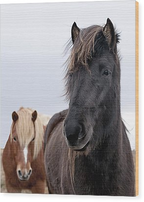 Iceland Horses Wood Print by Mike Santis