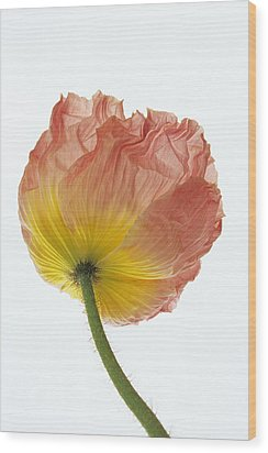 Wood Print featuring the photograph Iceland Poppy 1 by Susan Rovira