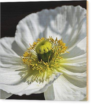 Iceland White Poppy Wood Print by Julie Palencia