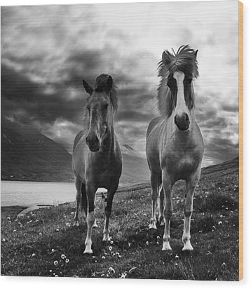 Wood Print featuring the photograph Icelandic Horses by Frodi Brinks